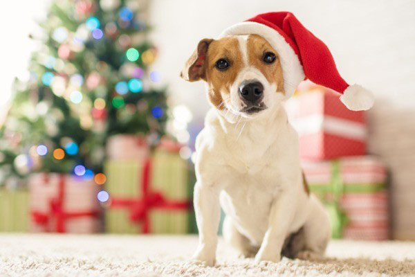 Keep Your Pet Safe This Christmas - Updated! - Advice, Guidance and Support.